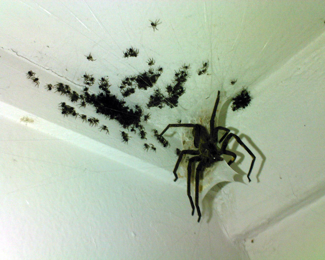 Spinnen - was kann ich dagegen tun? - Seite 46